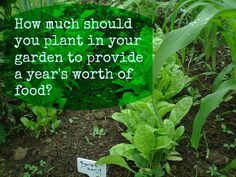How much should you plant in your garden to provide a year's worth of food?