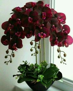 Real Touch Orchid - home decor plants - Orchideen Orchids Garden, Orchid Plants, Garden Plants, Indoor Plants, House Plants, Orchid Flowers, Orchid Care, Flowers Garden, Red Orchids