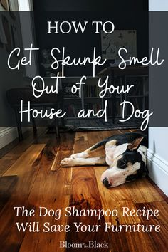Has your dog been skunked? Get rid of skunk smell in your home with this step-by-step plan. Recipe for a skunk odor neuralizing dog shampoo included. Dog Sprayed By Skunk, Skunk Spray, Skunk Smell Remover, Odor Remover, Skunk Smell In House, Getting Rid Of Skunks, Dog Smells, What To Use, Dog Shampoo