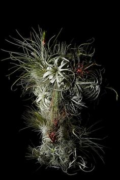 SORN/Art: The Floral World of Makoto Azuma | sornmag.com