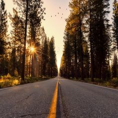 asphalt road in the middle of pine forest during day photo – Free Road Image on Unsplash Places To Travel, Places To Visit, Travel Destinations, Travel Tips, Us Travel, Asphalt Road, Road Trip, Nevada Mountains, California Camping