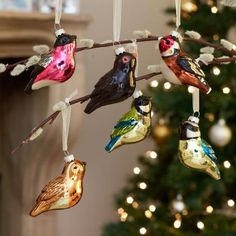 We can't get enough of our new, hand-painted glass bird decorations! Their jewel-like colours will sparkle on your Christmas tree. Bird Decorations, Christmas Tree Decorations, Christmas Ornaments, Holiday Decor, Xmas, Bird Identification, Save Nature, Bullfinch, Glass Birds