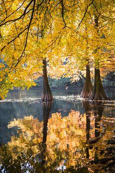 de mooiste natuurgebieden in Brabant - Fotografille Color Photography, Amazing Photography, Landscape Photography, Nature Photography, Photo Background Images, Photo Backgrounds, Nature Pictures, Beautiful Pictures, Feeling Pictures