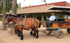 Laura Hartwig Winery, Colchagua Valley, Chile