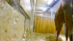 Clever horse! This is just adorable and definitely shows just how smart our furkids are. So worth watching. Houdini!!