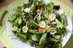 Basischer Lattichsalat mit Gänseblümchen