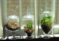 DIY Carnivorous Plant Terrariums