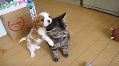 Este gato sabe mantener la calma estóica. ¡Ni yo no podría hacerlo!