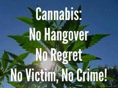 Cannabis No hangover no regret no victim no crime!!!