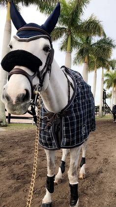 Casual qualified Horse riding out fit Cute Horses, Horse Love, Horse Girl, Beautiful Horses, Equestrian Boots, Equestrian Outfits, Equestrian Style, Horse Pictures, Horse Photography
