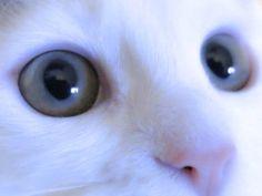 gözler..