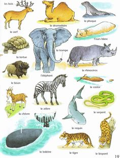 animaux First thousand words in French