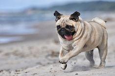 4 encantadoras razas de perros con arrugas — Mis animales