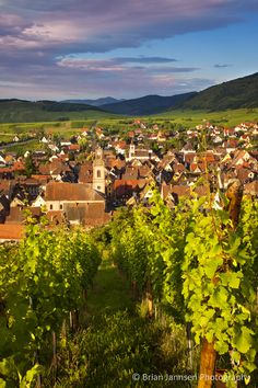 Early morning overlooking village of Riquewihr, Alsace Haut-Rhin France. © Brian Jannsen Photography