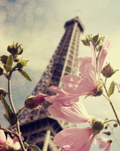 Paris Photo - Eiffel tower in spring - blossoms - Paris is Blooming