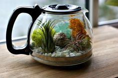"""Coffee pot terrarium. Supplies: (1)Coffee pot (2)Mini air plants-pictured are Lonantha Fuego & Green Tilandsia (3)White Sand (4)Moss-bright is best (5)Aquarium rocks (6)Decorations-gemstones, shells, miniatures. Directions: Fill container w/about 1"""" of sand. Scatter rocks over sand (heavier in back for added height). Placed moss over rocks in back. working back to front. For maximum visibility place plants in front w/gemstones in between"""