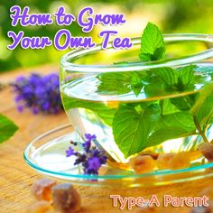 How to grow your own tea garden including a floral herb garden, medicinal tea garden, & lemon or licorice tea gardens!