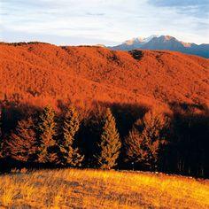La Natura in #Alapgo  http://www.alpagocansiglio.eu/it/sport-e-natura/natura-in-alpago