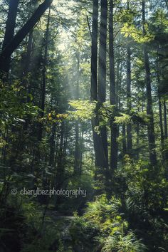 Light in the Forest - an inspiration-filled photo of sunbeams penetrating the canopy of thick forest, illuminating the path through the undergrowth. My World, Canopy, Paths, Mountains, Landscape, Nature, Photography, Travel, Inspiration