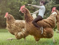 Writing Prompt: You have stumbled into a land of giants. You find yourself on a farm, where chickens are the size of adult men. Write a story about your experiences on the farm, be sure to include: the setting, several farm animals, dialog and lots of sensory details in your story.