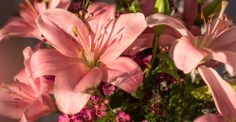 Kalenderwoche 09 langstielig: rosa Brindisi Lilien