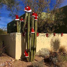 It's the Holiday Season in Tucson, Arizona!  (Photo via Instagram by @tucsonkathy)