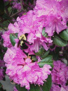 Bee <3