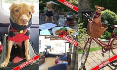 Tuna goes to the pub! Instagram's ugliest pup shares his holiday diary