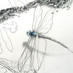 Judith Mason Ink Pen Drawings, Charcoal Drawing, Moth, Art Work, Mixed Media, Butterfly, Artist, Painting, Beauty