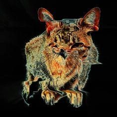 Glitch art - zipped Cat - error