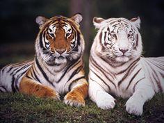 Leuke dieren