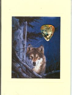 Wolf Collecters Plaque with Wolf Image Guitar Pick - Wolves - Wolf - Lot 3