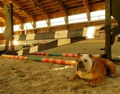 Barn Dogs: How to Make Good Manners STAY!