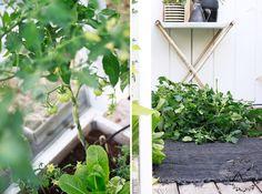 KUKKALA #greenhouse #kasvihuone