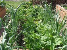Экономим не только место и время, но и получаем защиту от полезных соседей.Существуют проверенные схемы посадки, которые позволяют занять всю землю и кроме того, получить с одной грядки аж 4 урожая.…