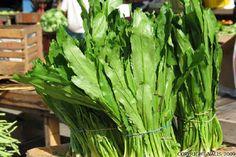 Trinidad Marketplace : Shado Beni