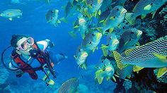 Shoal of colorful fish in Australia! #scuba #diving