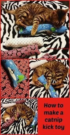 How to make a catnip kick toy for cats. Sew your own cat toys! How to make a catnip kick toy for cats. Cat's love to kick at and roll around with their toys when they play. This easy to make toy is everything they love for playtime! Diy Cat Toys, Homemade Cat Toys, Dog Toys, Toy Diy, Grumpy Cats, Diy Jouet Pour Chat, Ideal Toys, Super Cat, Small Cat