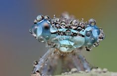 OooooOOoOoO by Ondrej Pakan, via 500px: Microcosmos. #Photography #Insect #Ondrej_Pakan