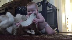 Child Sneaks Up On Huge Husky, And The Entire Internet Is Talking About The Dog's Reaction - Diy Gifts A Husky, Sneaks Up, Small Baby, Internet, Life Lessons, Diy Gifts, Pets, Children, Snacks