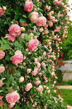Cottage Garden Plants, Floral Wreath, Gardening, Wreaths, Beautiful, Gardens, Pink Blossom, Flowers, Fitness Abs