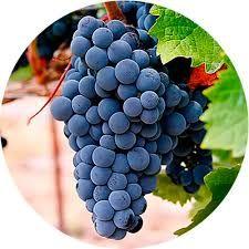 Blog de Vinos de Silvia Ramos de Barton -The Wine Blog- Argentina -: Un Merlot de Andeluna