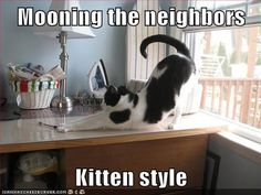 http://www.thecatsmeowpetsitting.com/