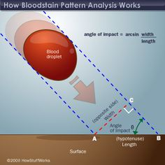 Angle of impact of a blood droplet