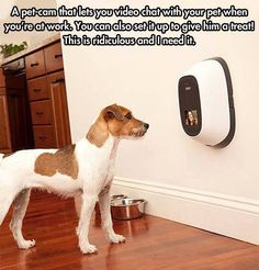 Pet cam.  Video chat with our pets when you're not home!  This is brilliant.