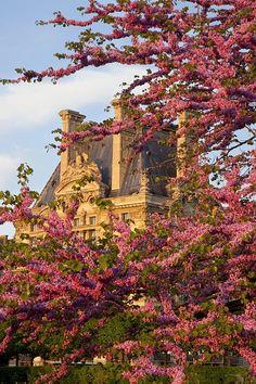 Paris Blossoms (Brian Jannsen)