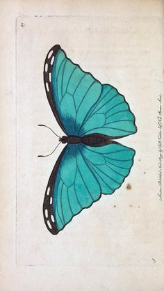 The Naturalist's Miscellany, or Coloured Figures of Natural Objects