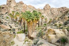This 2 day itinerary will take you through all the best sights and hikes in Joshua Tree National Park - a perfect natural escape! Route 66 Road Trip, Hiking Guide, Joshua Tree National Park, Main Attraction, Round Trip, Mount Rushmore, Grand Canyon, Around The Worlds, Palms