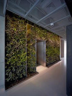 public green wall - Google Search