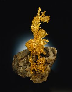 """""""The Dragon"""" is an 18-cm. tall crystallized gold cluster on matrix from the Colorado Quartz mine in Mariposa County, California. This specimen was discovered in 1998 and now resides at the Houston Museum of Natural Sciences. American Mineral Treasures, p. 20. (Photo © Jeffrey Scovil)"""
